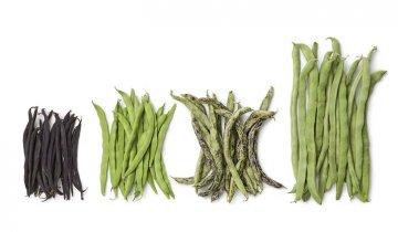 Pěstování fazolí