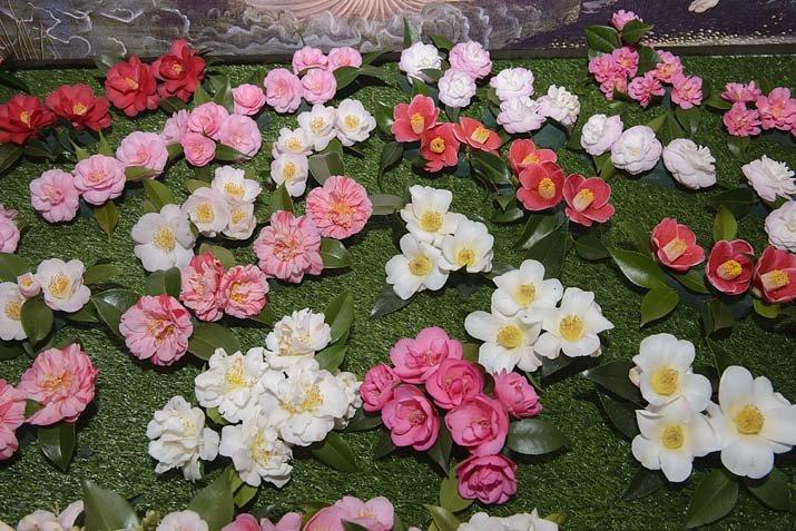 c4b282055cb různé barvy a tvary květů kamélií