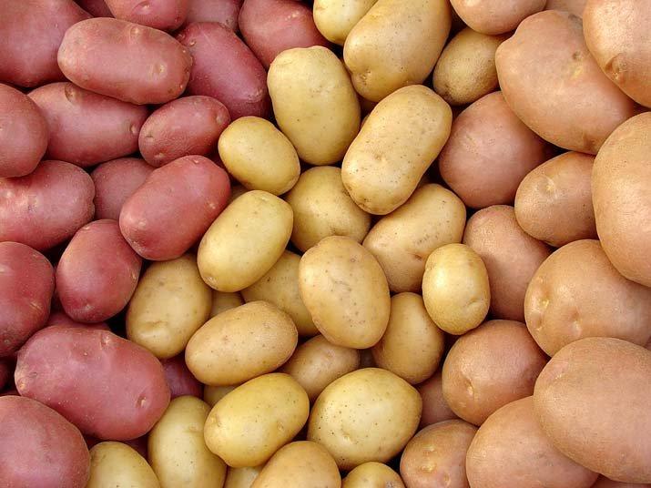Výsledek obrázku pro brambor